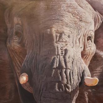 The Elephant by Gigi Gigja | maleri
