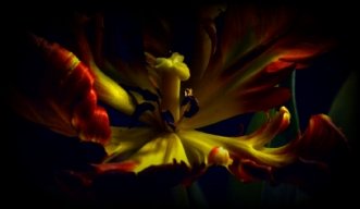 TULIPAN NEGRO 4 by Lis Roger | unikaramme