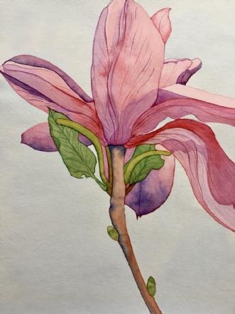 Magnolia by Puk Josefine Risom | tegning