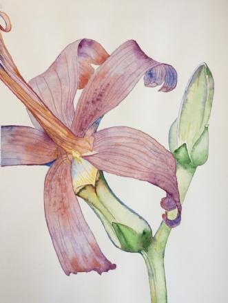 Lilje by Puk Josefine Risom | tegning